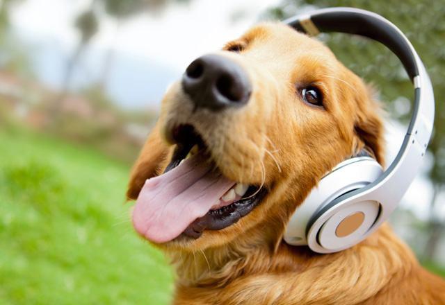 Música para cachorros