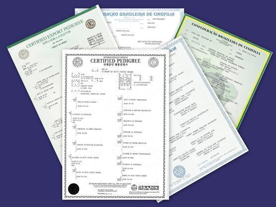 Pedigree nada mais é do que um certifcado de registro genealógico