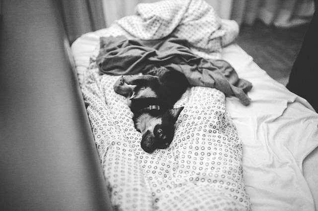 Cães sempre dormem amontoados, pois se esquentam e se protegem de perigos