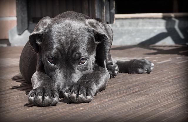 Sinais de ansiedade em cães