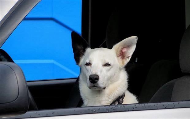 Cão 2