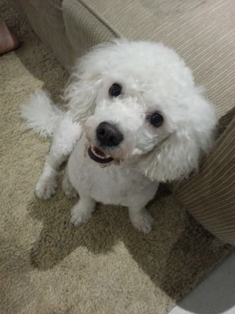 Cachorrinho Hugo da Martha Simone até sorriu para a foto