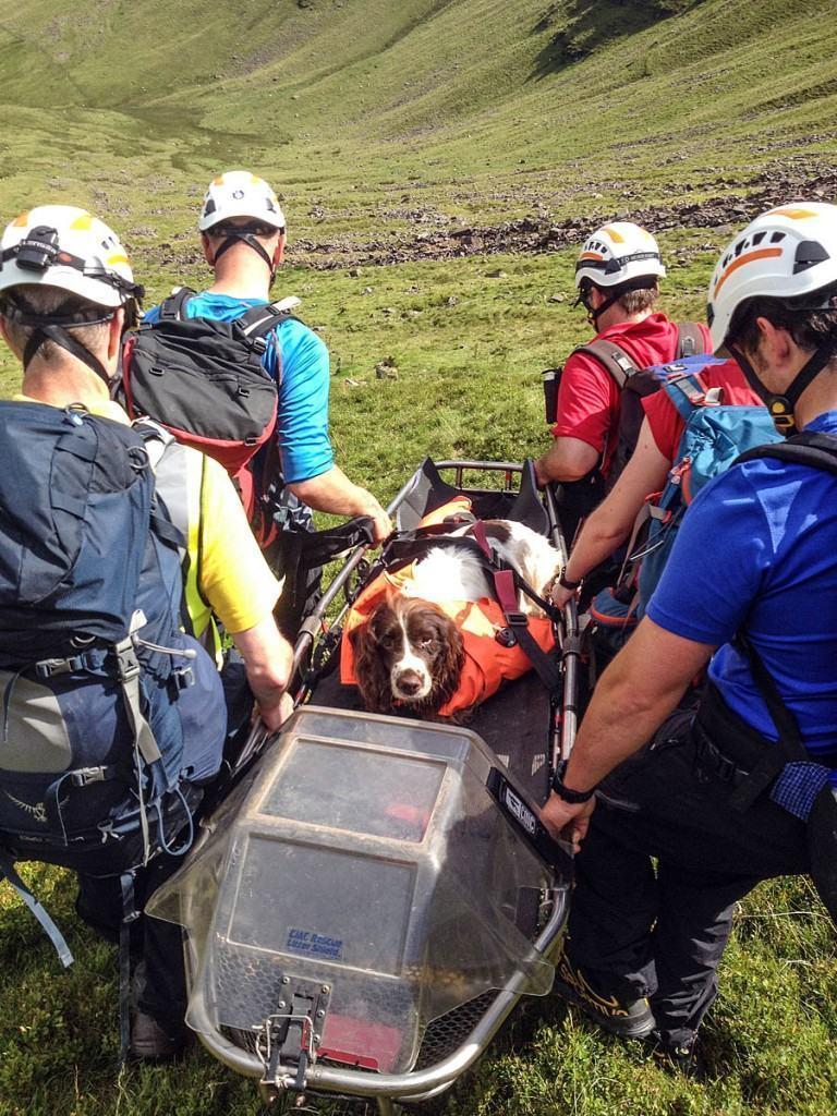 Cachorro sobrevive após queda de penhasco de 200 metros enquanto brincava