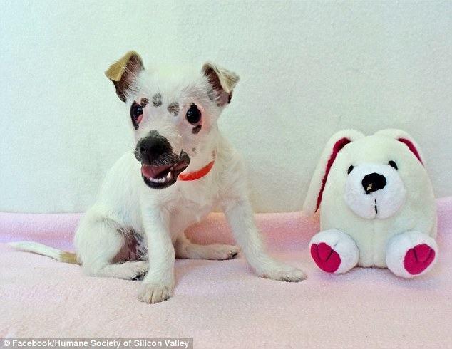 Cadela encontra família e é adotada após maus tratos