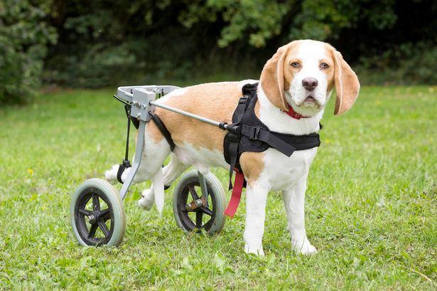 Cão atingido por carro tem recuperação surpreendente e volta a se locomover