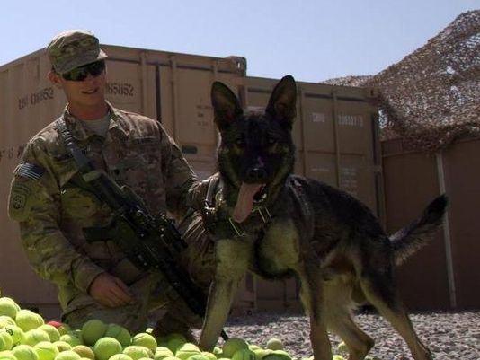 Cão do exército reencontra antigo parceiro militar de guerra