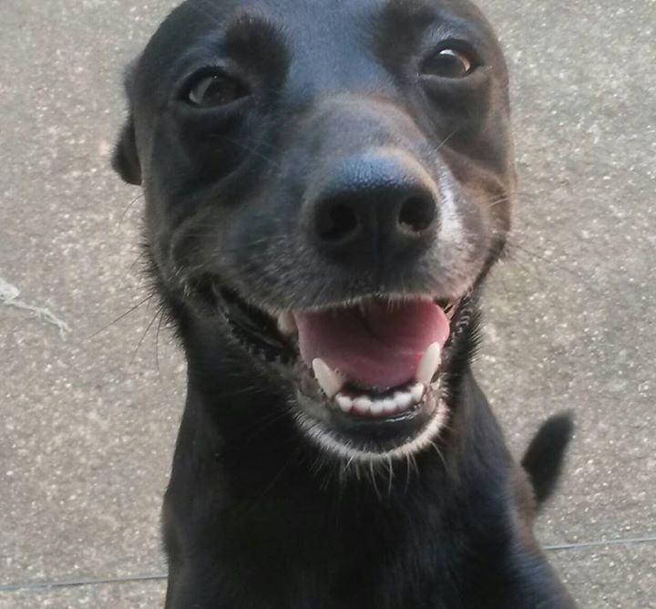 Cão Lupo, da Luana Paula, mandando aquele sorrisão!