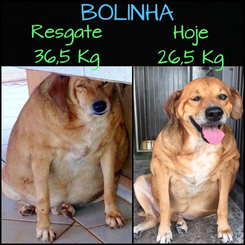 Cão obeso tem transformação incrível