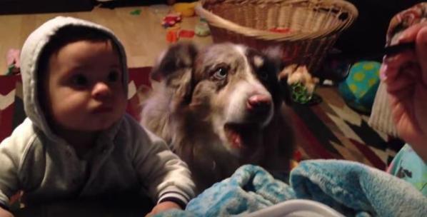 Cachorro se 'adianta' ao falar 'mama' antes de bebê