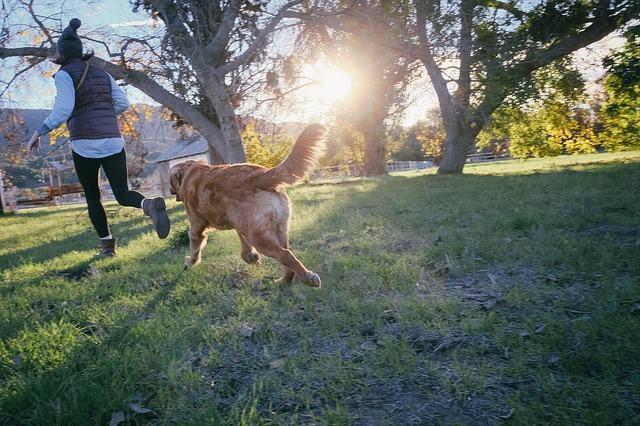 Como impedir que seu cachorro fique pulando nas pessoas?