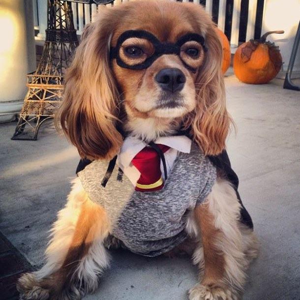 Dog Potter 10