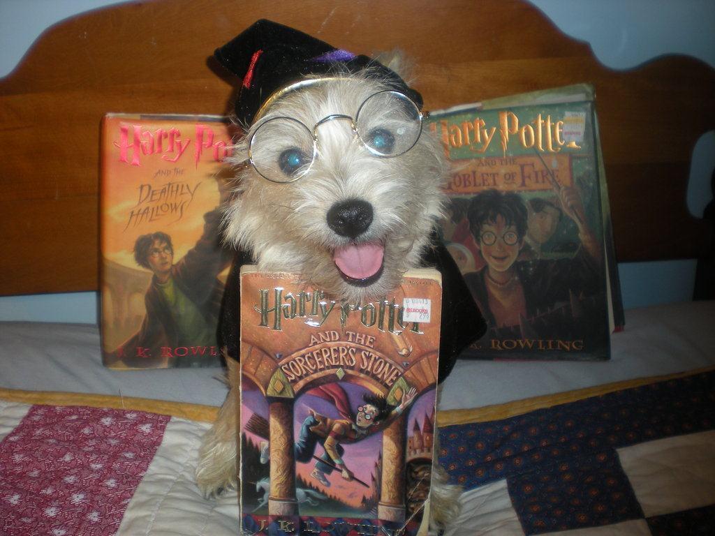Dog Potter 11