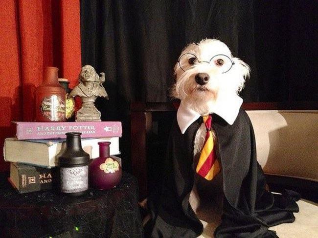 Dog Potter 12