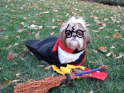 Dog Potter 13