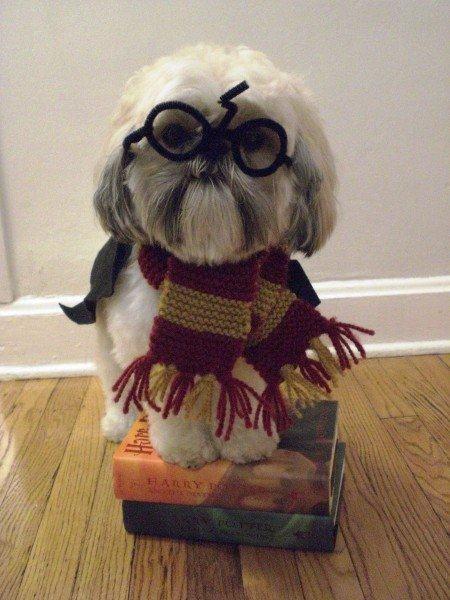 Dog Potter 14