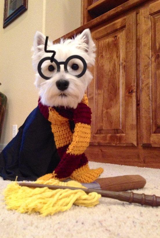Dog Potter 2