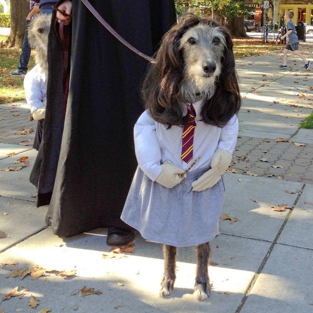 Dog Potter 3