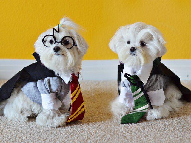 Dog Potter 4