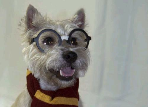 Dog Potter 5