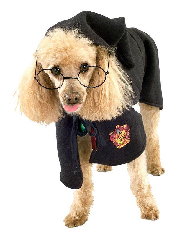 Dog Potter 6