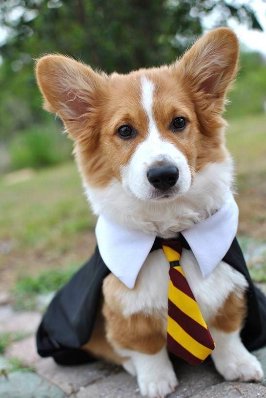 Dog Potter 7