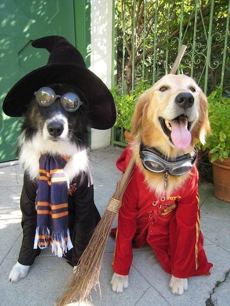 Dog Potter 8