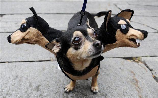 Dog Potter 9