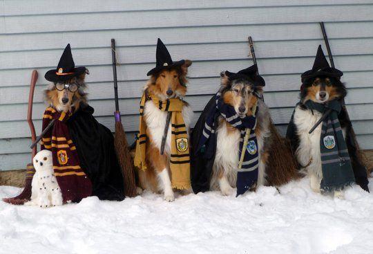 'Dog Potter': Confira 15 cães fantasiados do 'bruxinho' Harry
