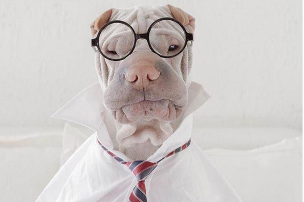 FOTOS: Cachorrinho enrugado vai fazer você querer ter um igual