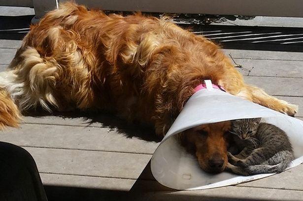 Imagem de 'aconchego' entre cão e gato viraliza na internet
