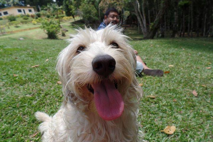 Minduin aproveitou a alegria do passeio e mandou essa foto, por meio da sua tutora Estela Vitor