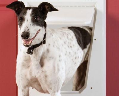 Portinhas para cachorros: facilite o acesso do seu pet