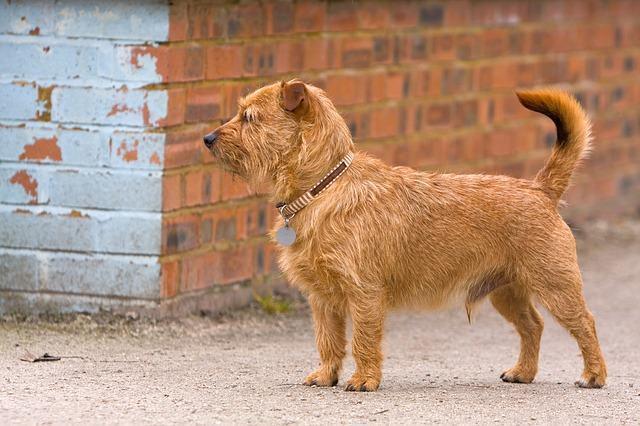 Saiba como evitar que o cão fuja para a rua