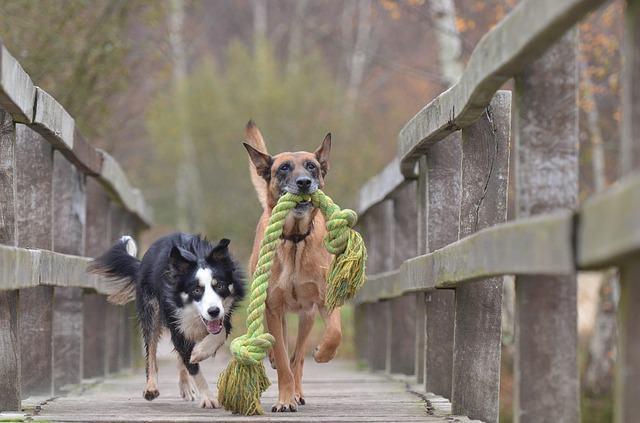 Transformando o cão travesso em um comportado