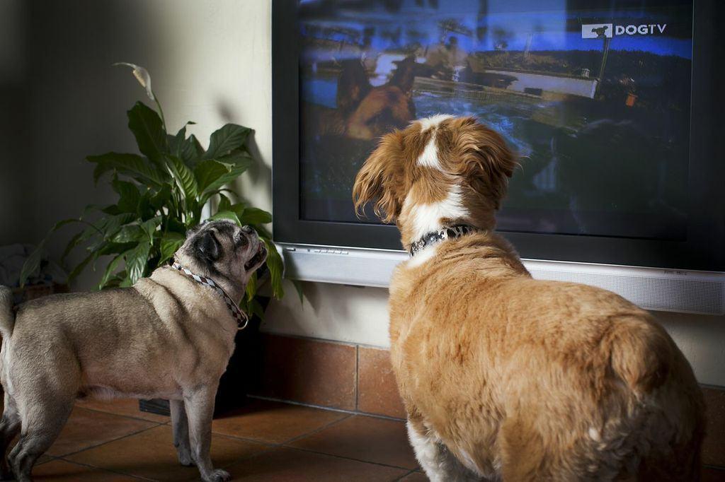 TV para cachorros