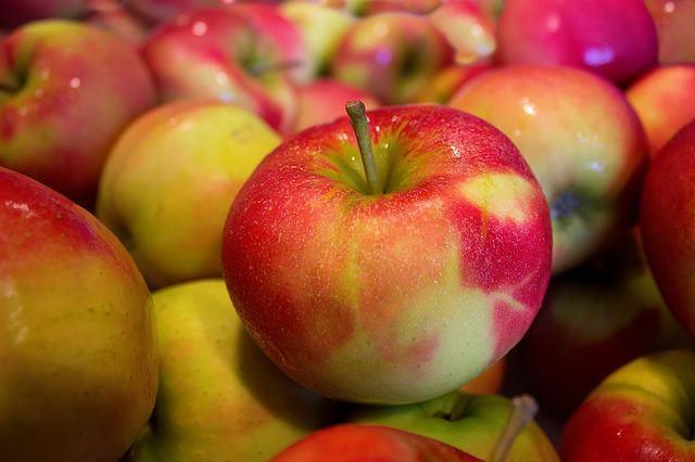14 frutas e legumes permitidos para cães