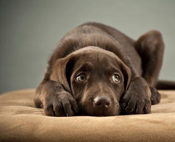 6 sinais que demonstram que seu cão está assustado