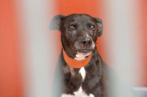 À espera de adoção, cadela está há quase um ano em canil