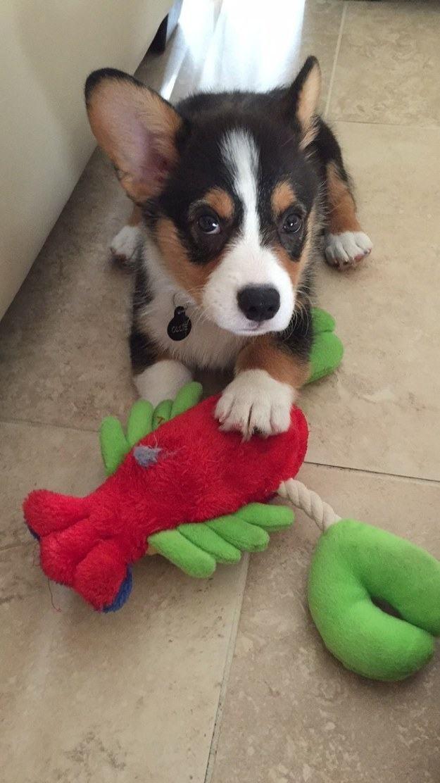 cachorrinho-descansando-na-brincadeira