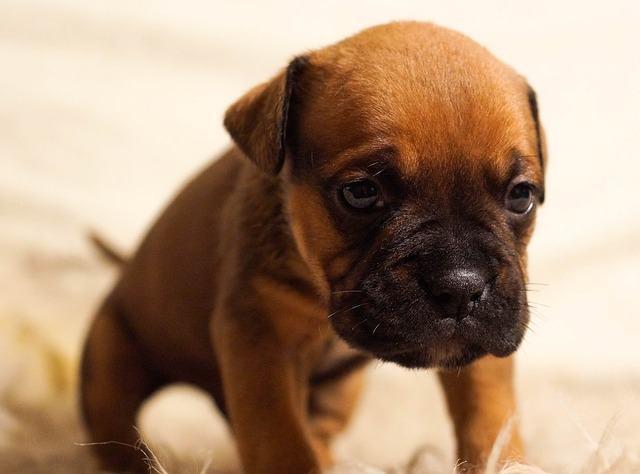 Cachorro vomitando: o que posso fazer?