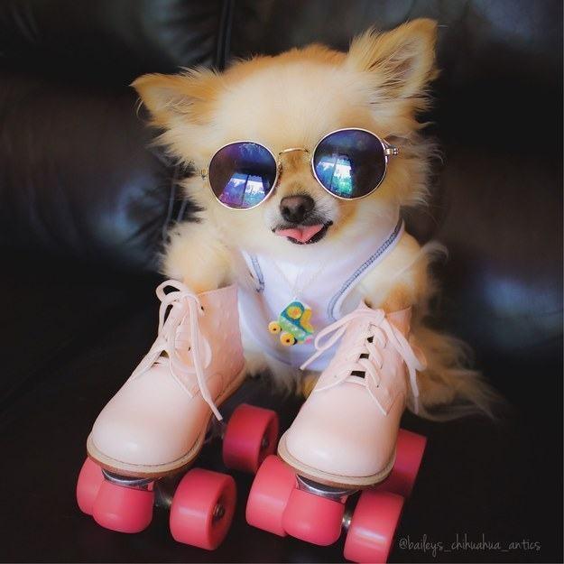cadela-estilosa