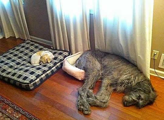 cao-dormindo-no-chao