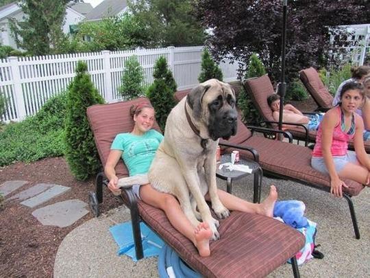 cao-em-cadeira-com-amiga-humana