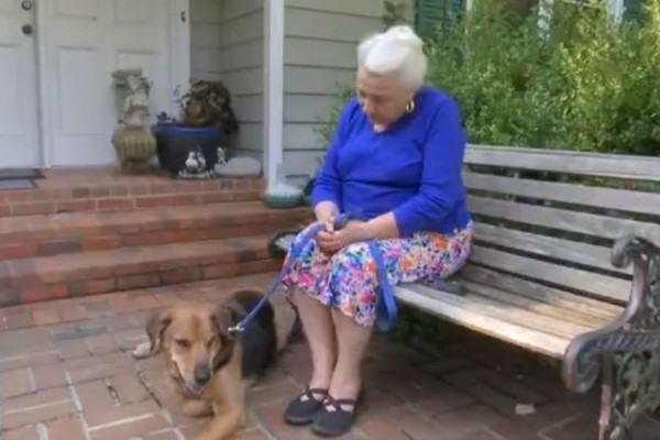 Cão viaja por sete meses até voltar para casa