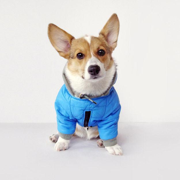 casaco-azul-maravilhoso