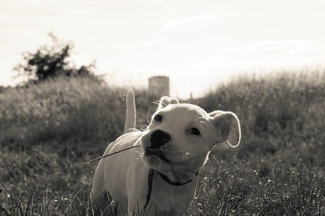 Como sei se meu cachorro está estressado?