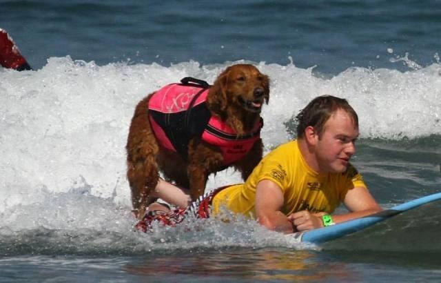 Conheça a cadelinha que surfa com pessoas deficientes
