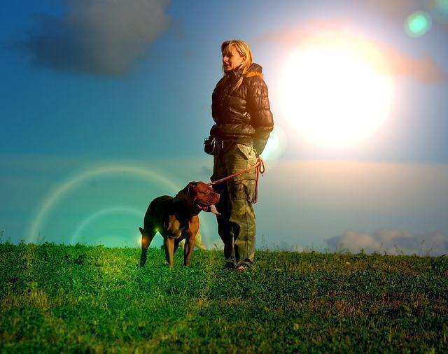 Descubra a importância do banho de sol para cães