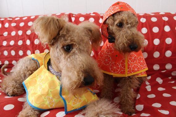 divertidas-capas-de-chuva