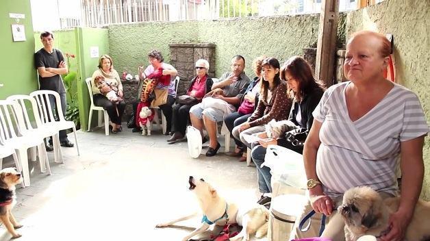 Em SP, centro espírita para animais realiza mais de 2.500 atendimentos mensais